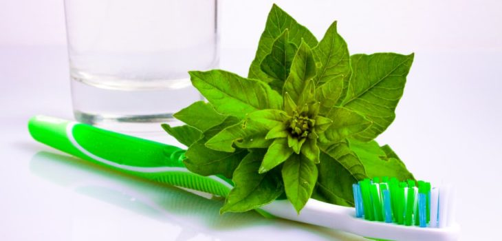 Mint and Toothbrush